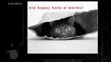 Skateshop Skrecz Limanowa - kot (Tworzenie Stron Internetowych RaVns)